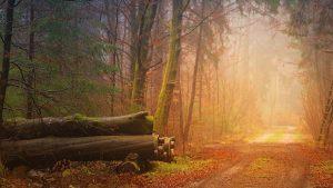 Bosque de Madera